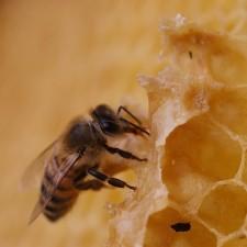 Méz, a folyékony arany